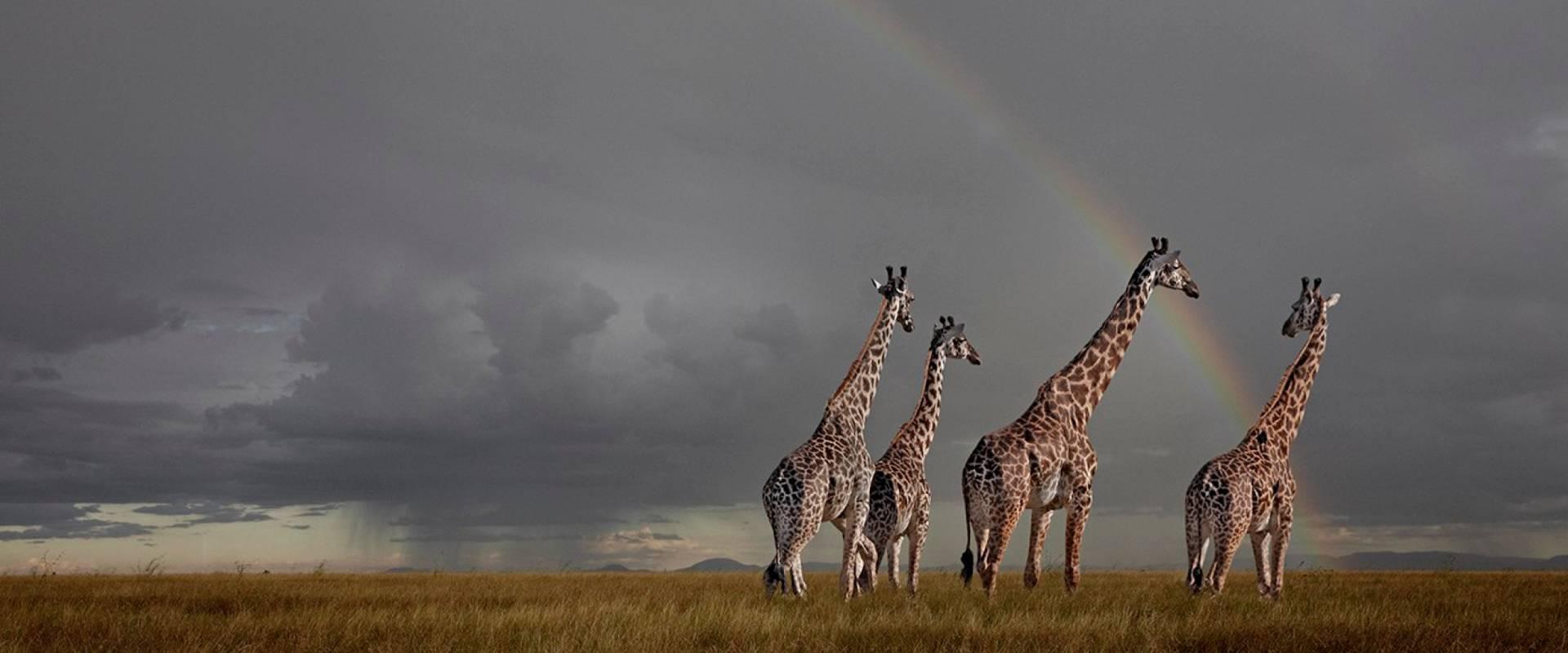 Wildlife Photography Animals